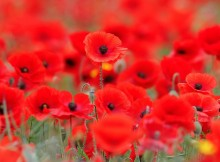 The candlelit remembrance evening will take place at St Mary's Church, Norton Green, Norton, near Stockton